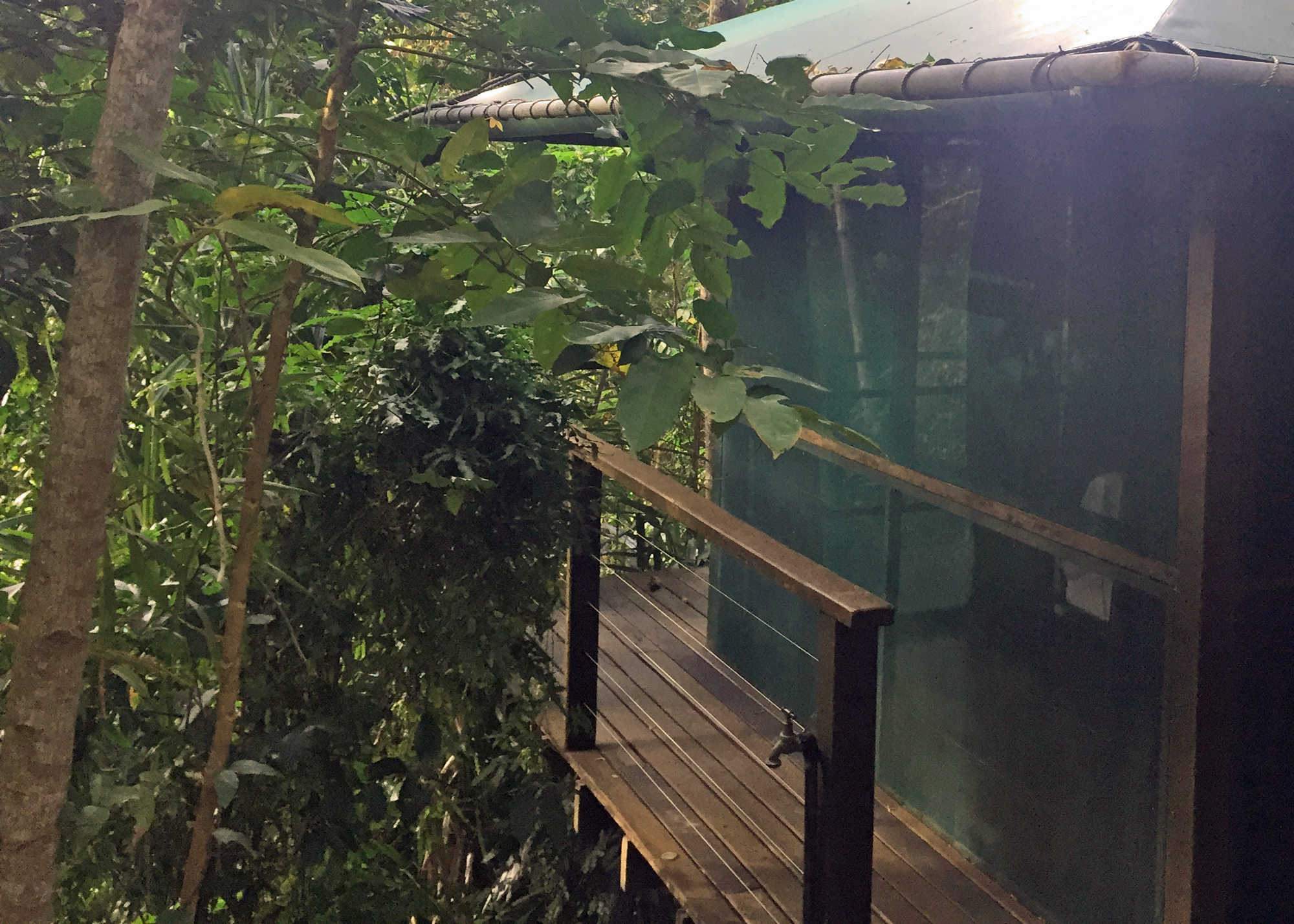 Our cabin in the rainforest