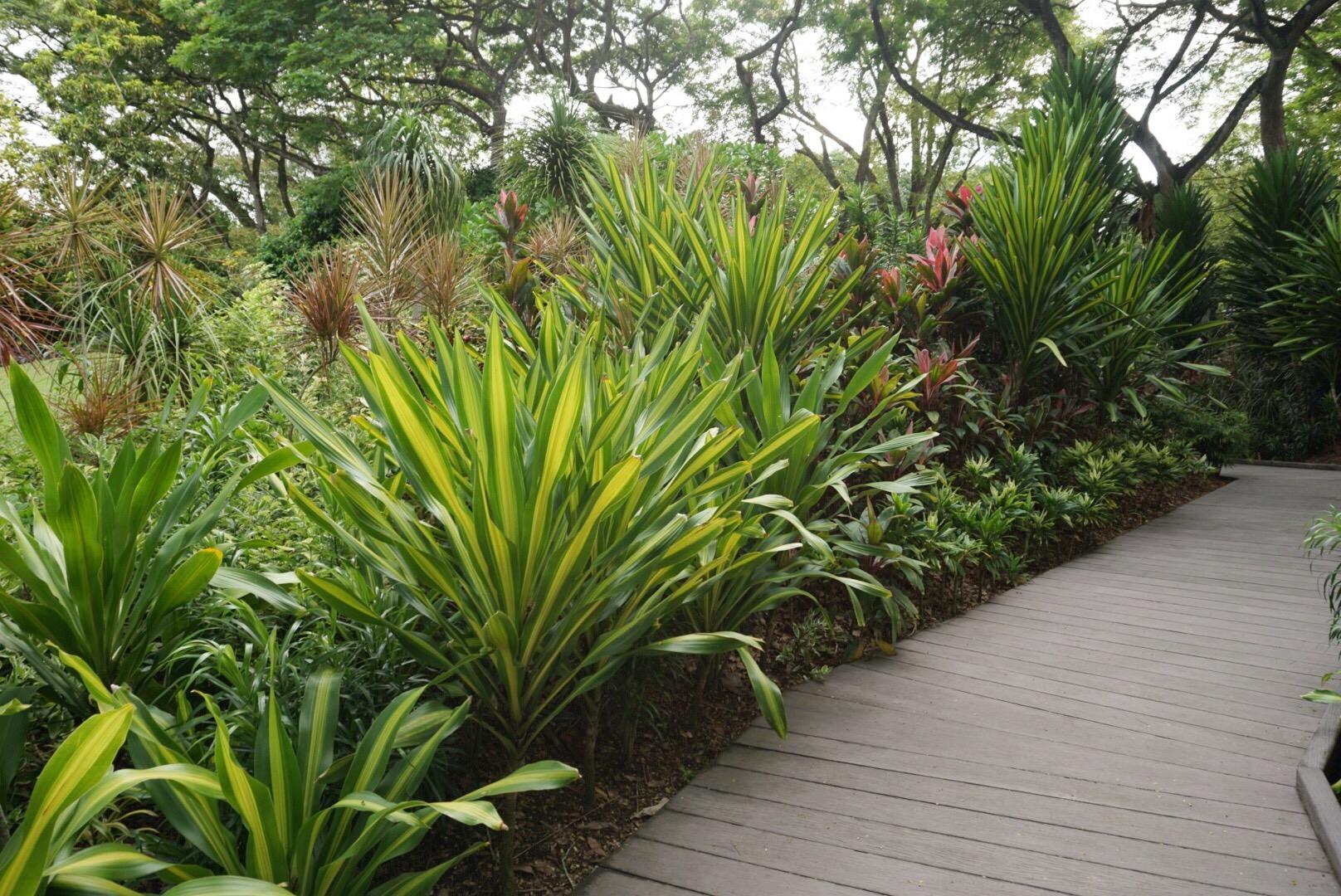 Perfectly manicured Singapore Botanic Gardens