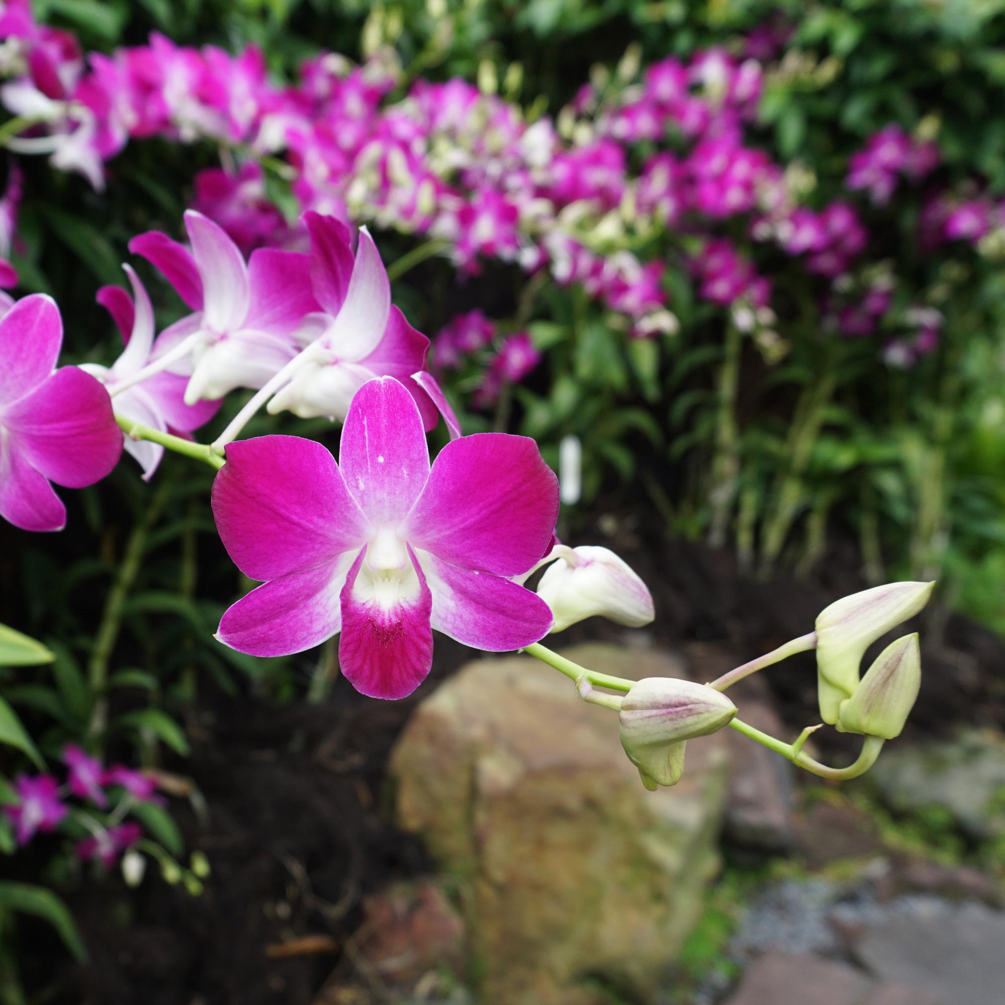garden2bSq.jpg