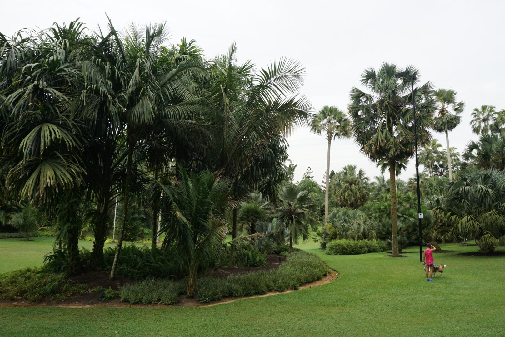 garden6a.JPG