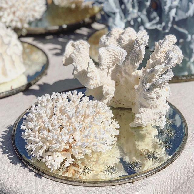 Such lovelies ⭐️. . . . . #antiquefair #oddities #coral #vintageshopping