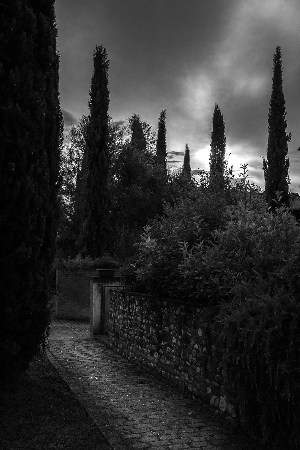 cypresspath.jpg