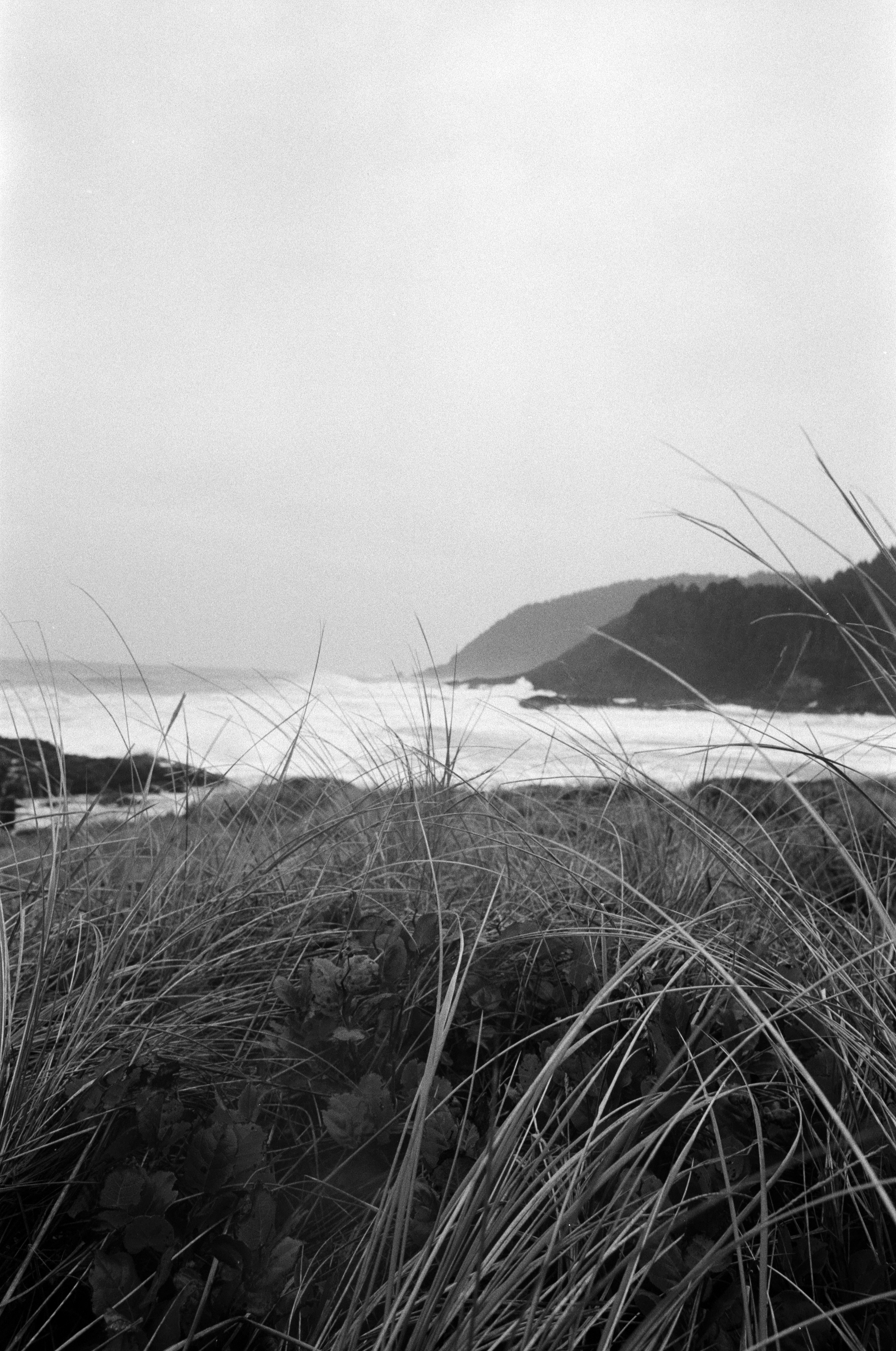 Ilford_Roll01_PNW_2019_002.jpg