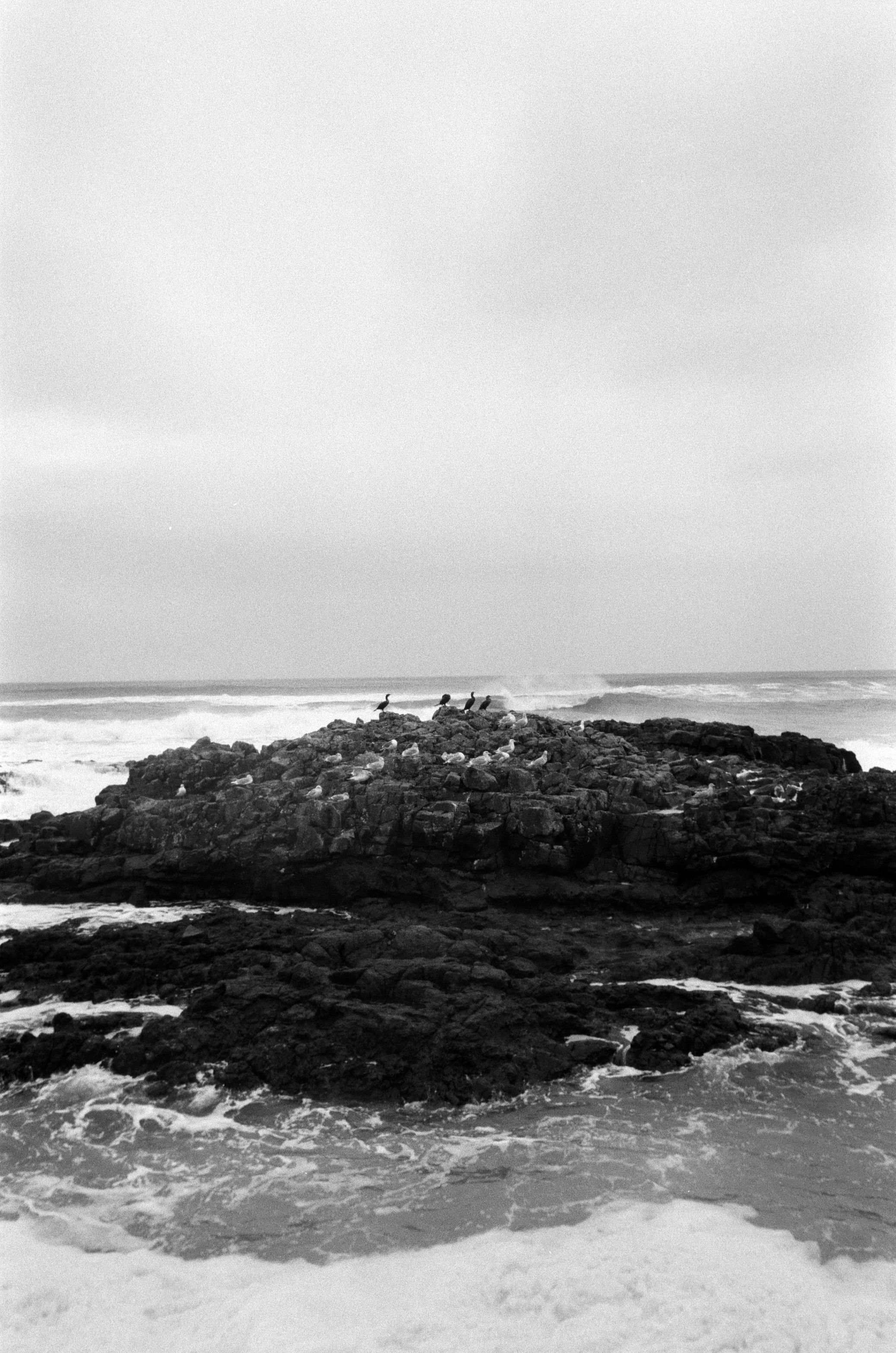 Ilford_Roll01_PNW_2019_003.jpg