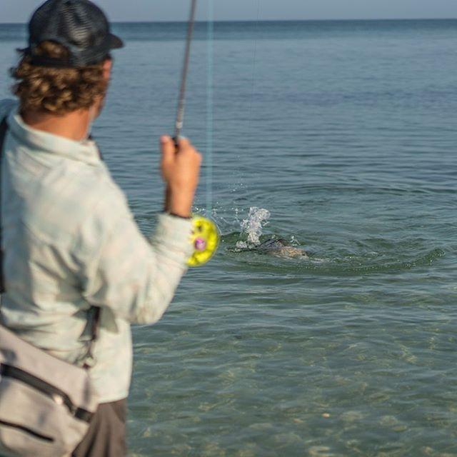 Get out and make a friend this weekend... @drchicone + @mavenfishing + @patagonia_flyfish + @saltyflytying #flyfishing #naples #florida #flyshopco #patagoniaflyfishing #costadelmar #ctsfishing #mavenfishing #saltyflytying