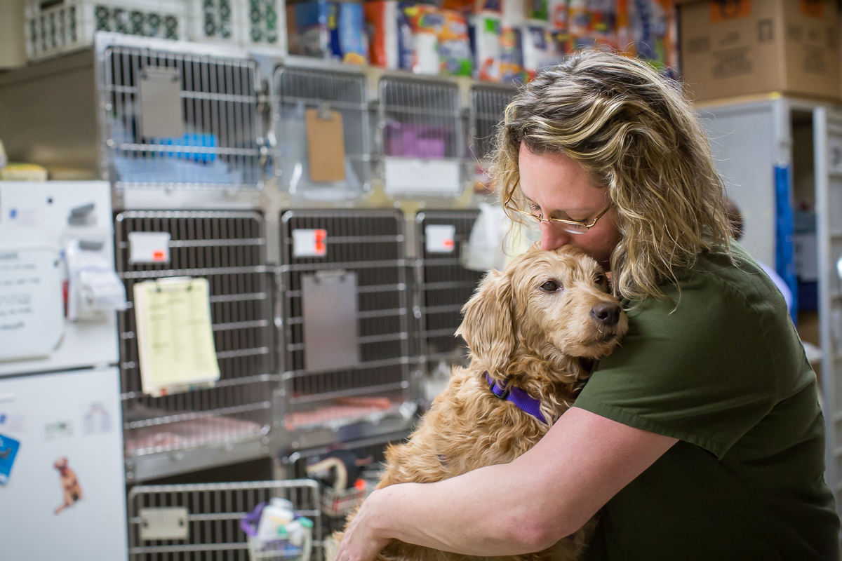 Veterinary technician supports dog in frederick md