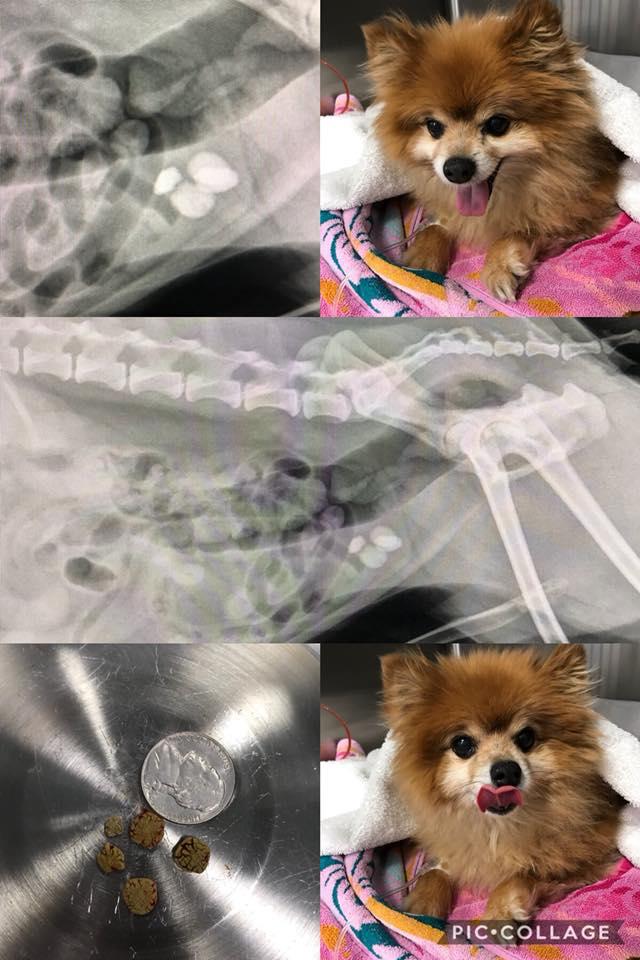 blood-urine-dog-bladder-stones-veterinarian-frederick-md.jpg
