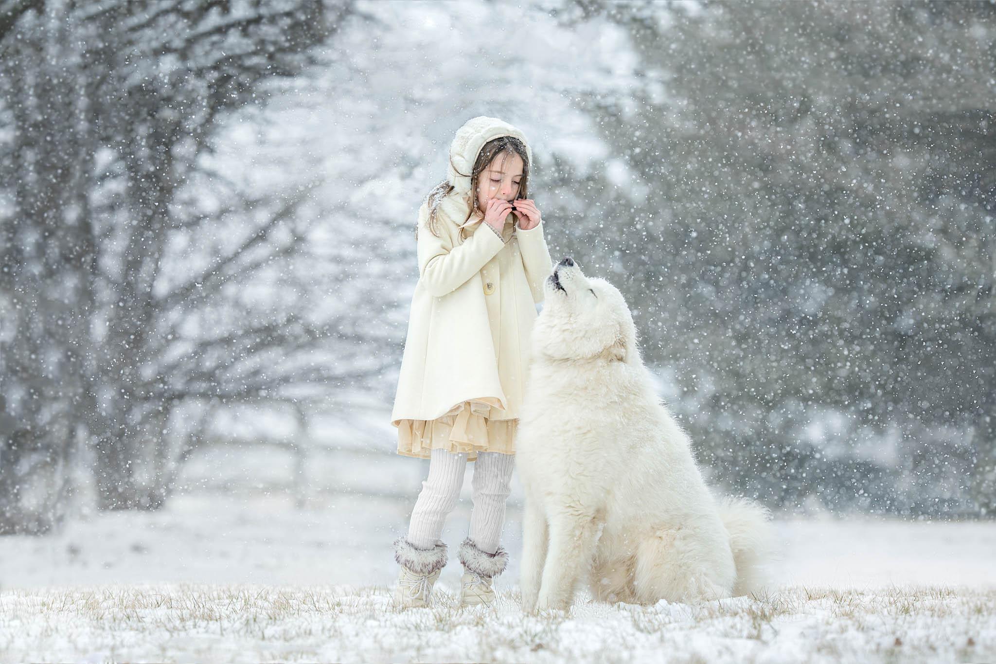 best_pet_portrait_photographer_maryland_samoyed_snow_howling.jpg