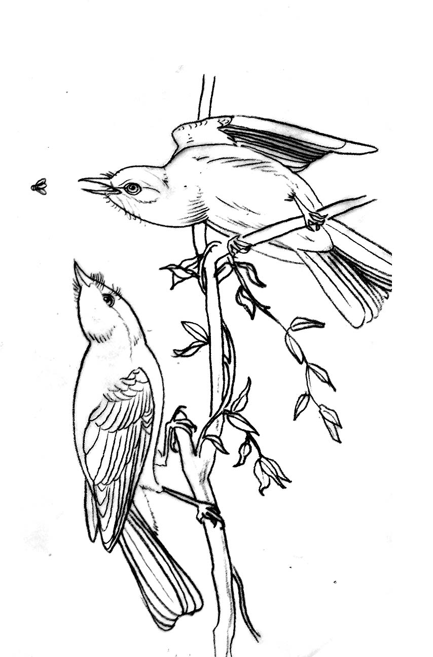 Audubon Flash #1 -
