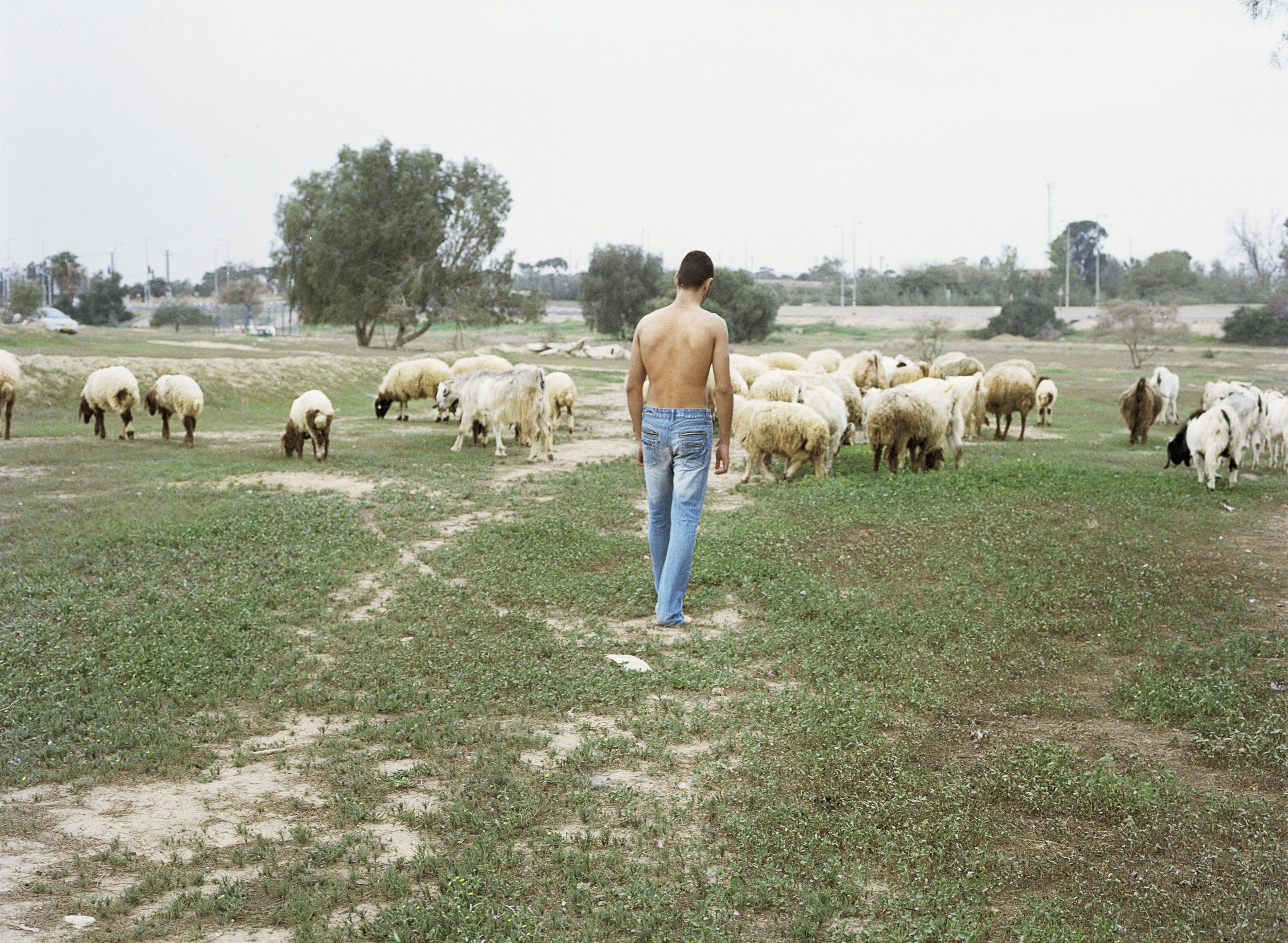 jack sheep.jpg
