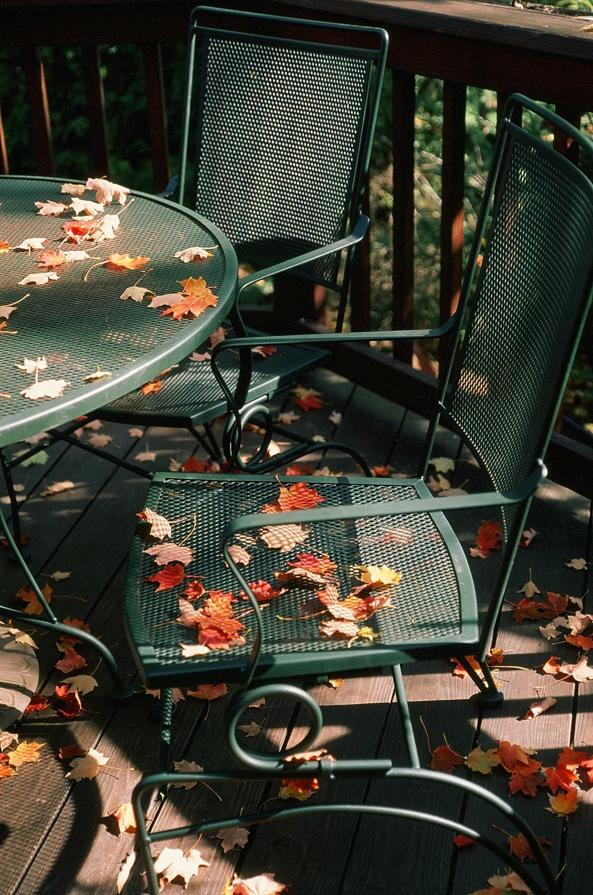 Leaves Be Seated.No23.JPG
