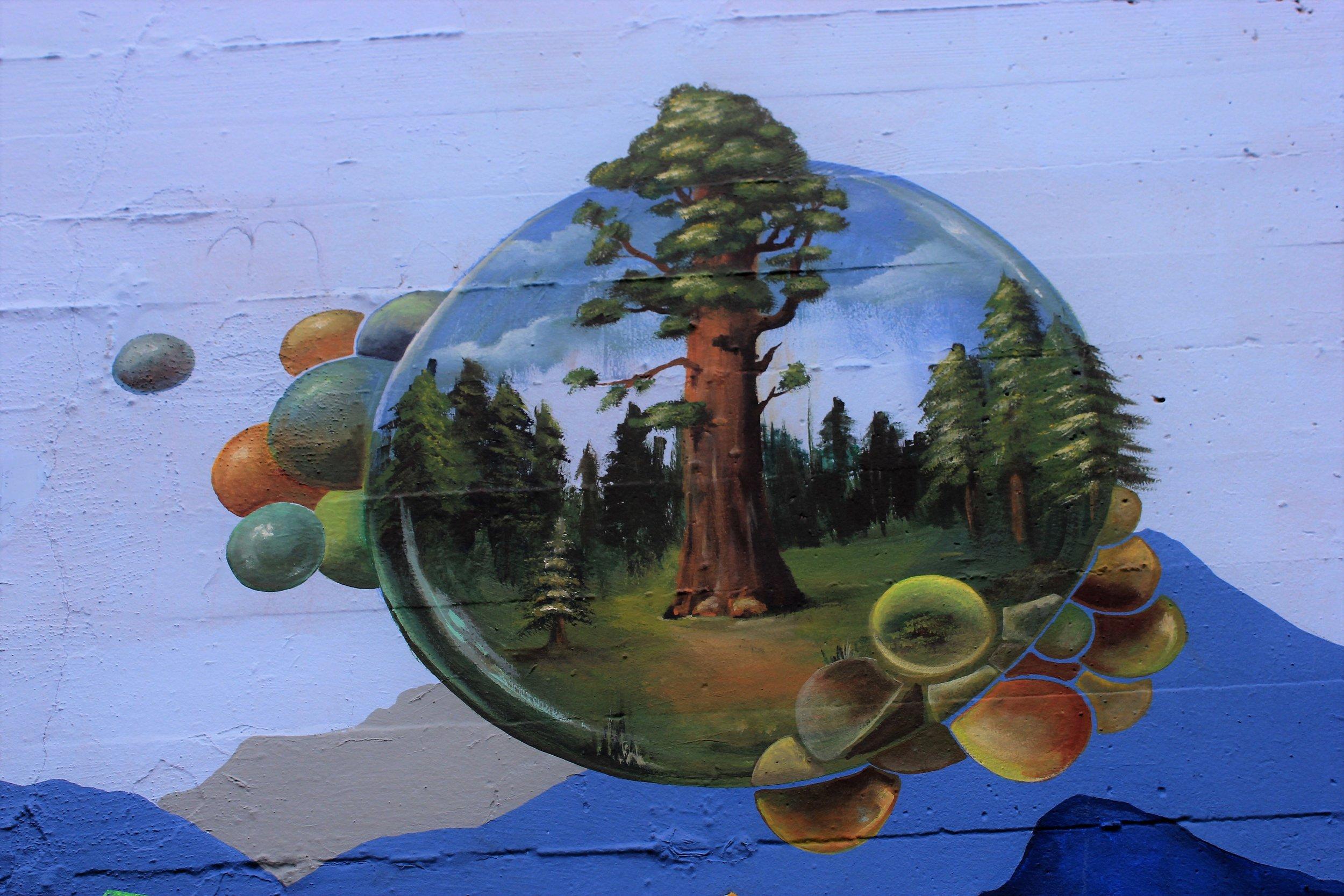 Sequoia Closeup.jpg