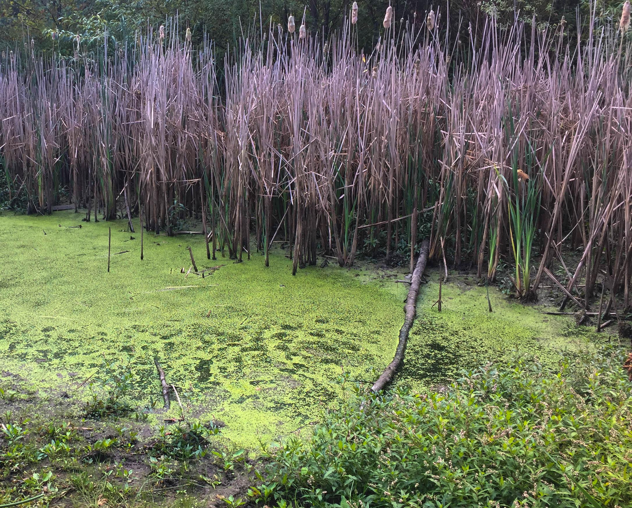 SwampBottom.jpg