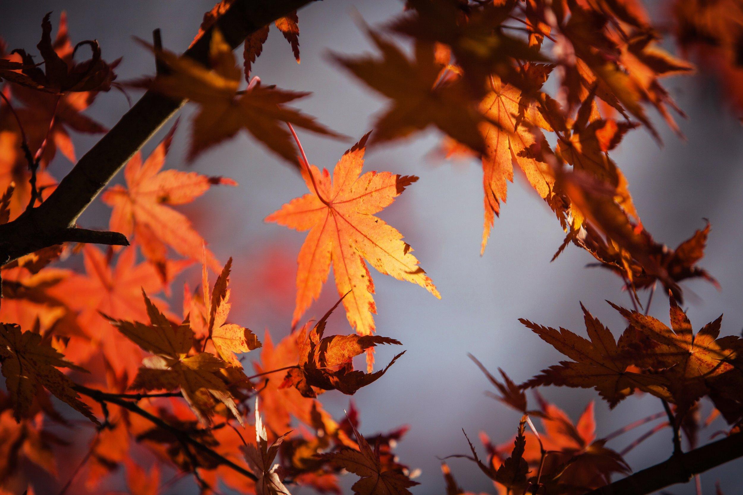 autumn-branch-fall-255381.jpg