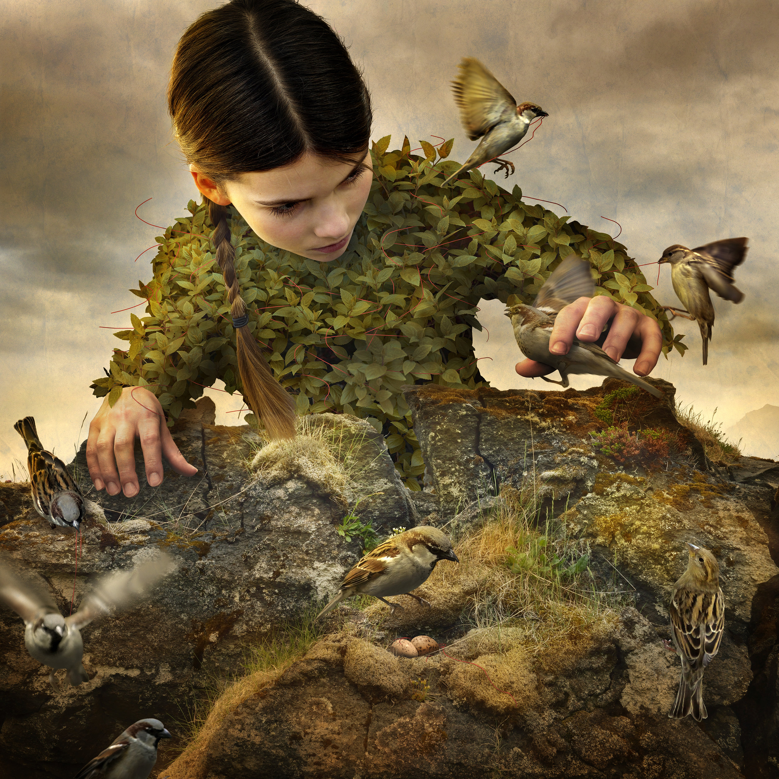 Hidden Aviary by Tom Chambers