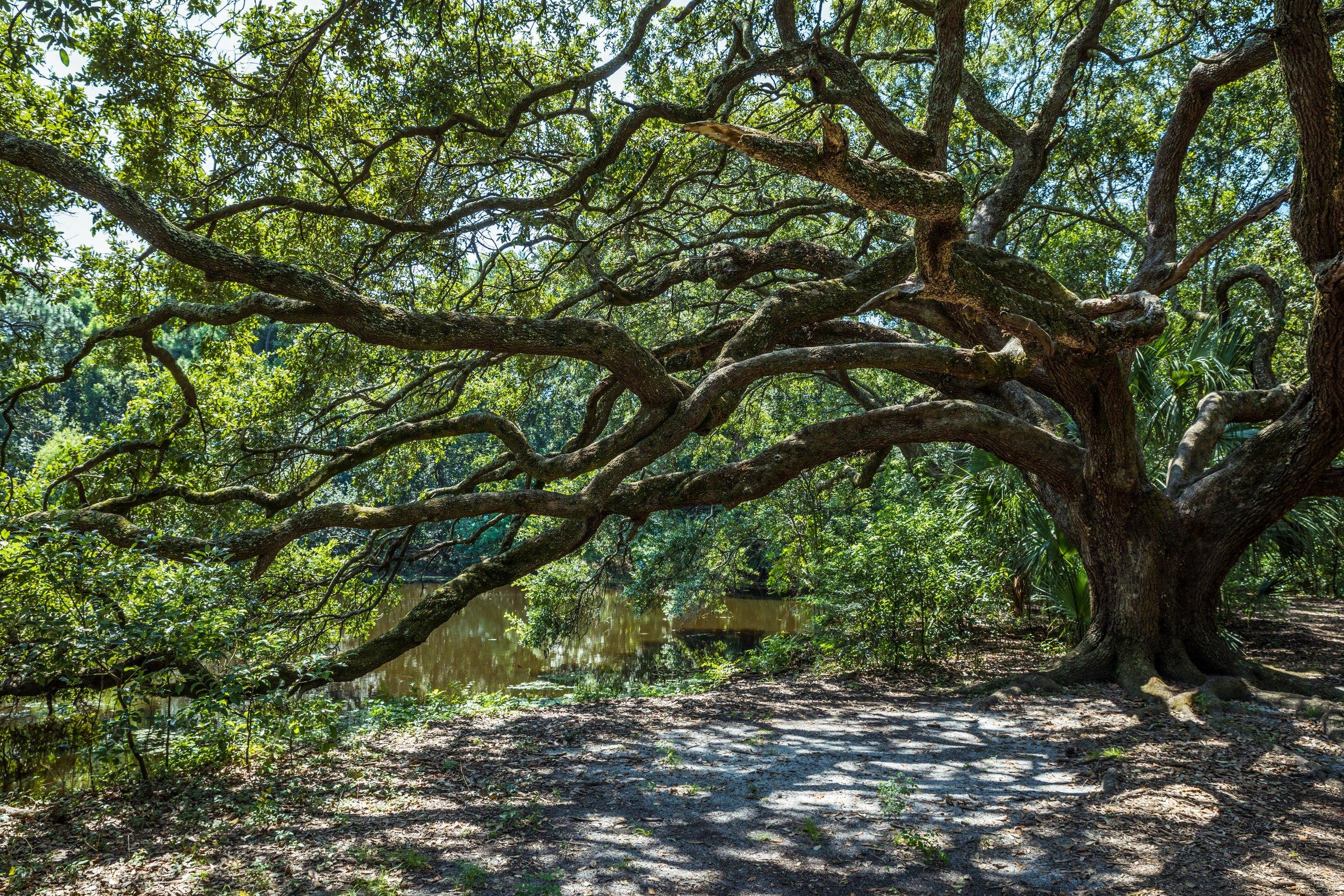 Nature's Tangle