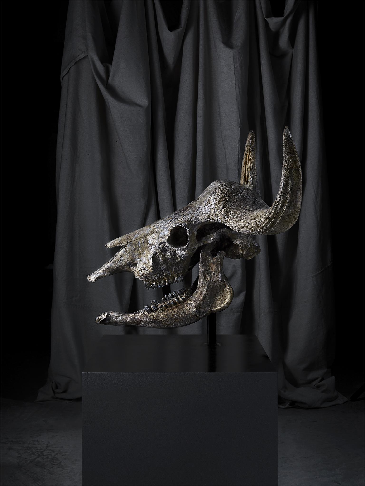 1906_Wilensky_Skull.jpg