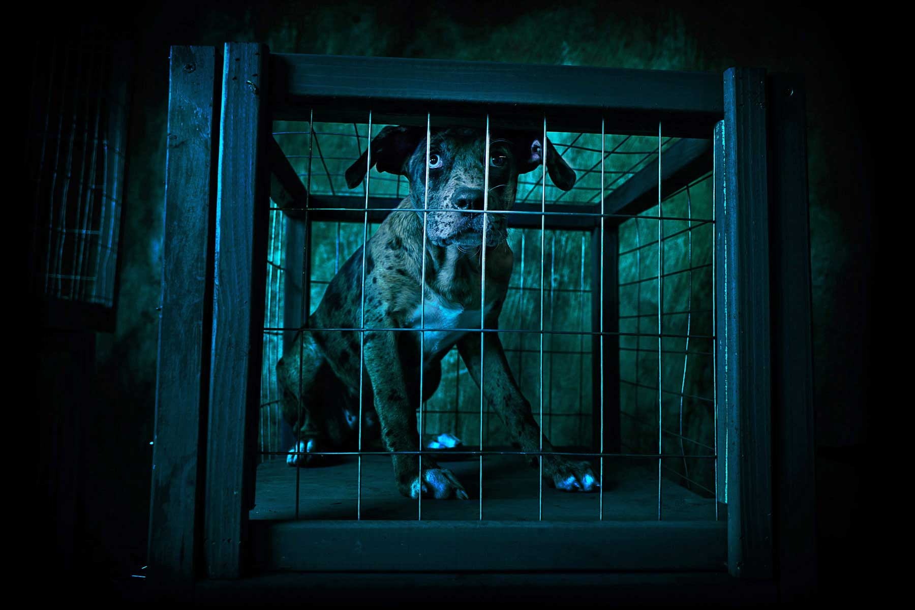 Eric Sahrmann_Dog Catcher_Scene4_Caged.jpg