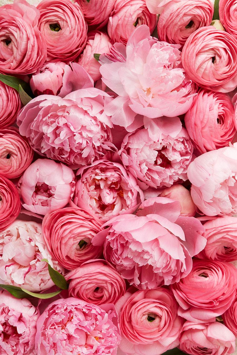 Spring_Flowers_3.jpg
