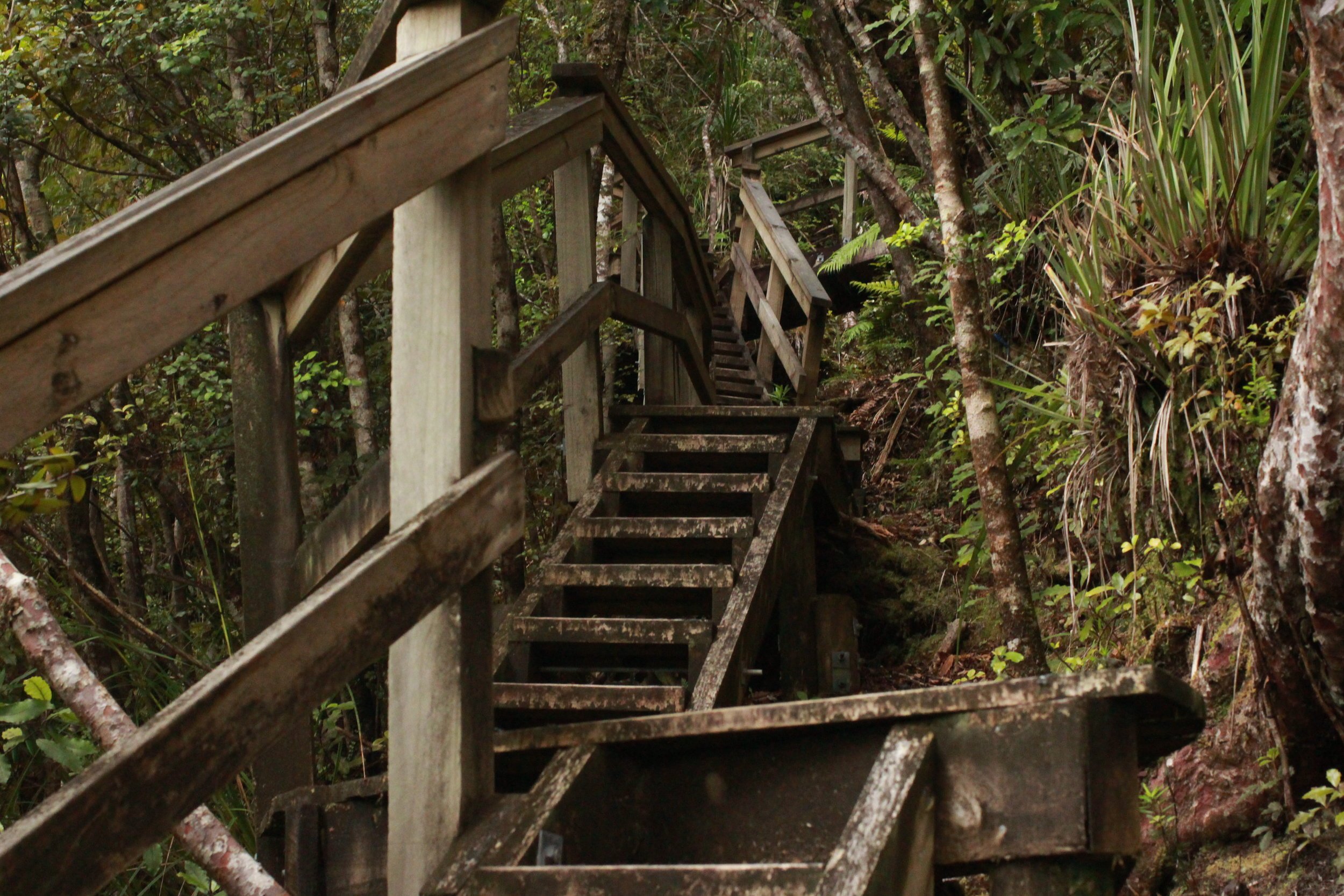 Stairway into the Jungle