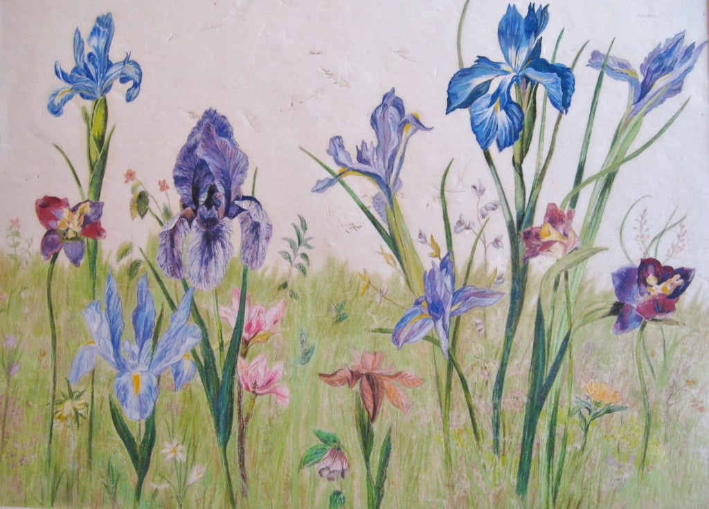 Field of Wild Flowers, colored pencils on hand-made paper, 18.5 x 25 inches