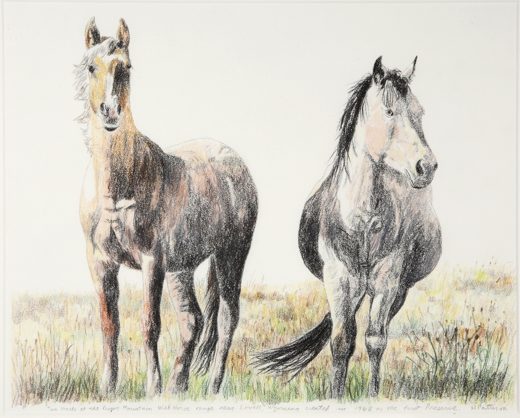 Two Mares, colored pencils on Arches, 13.5 x 17 inches