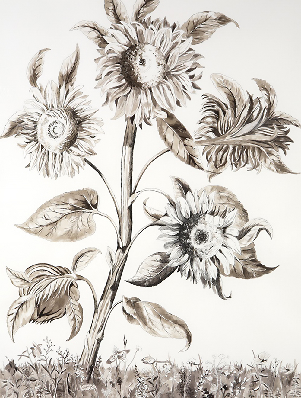 Stalk of Sunflowers, watercolor and ink washes on paper, 28.5 x 22 inches