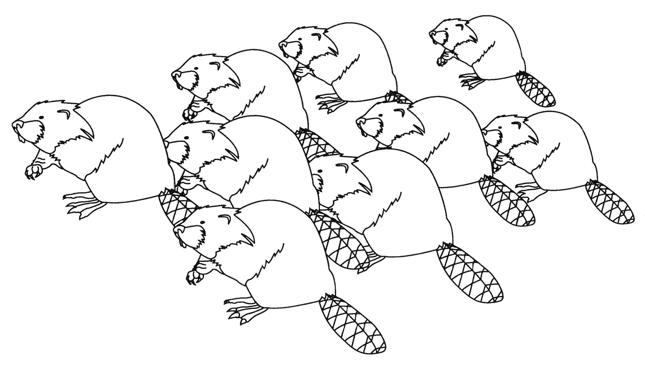 45_beavers3.jpg