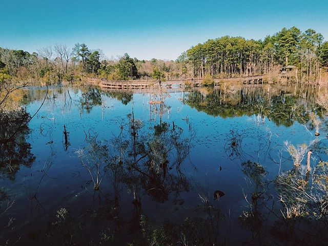 One of the best parks we love exploring while on location in Louisiana! . . . . . #cameradept #cameraassistant #reddragon #dronelife #drone #drones #droner #mothershipimaging #virtualreality #vr360 #onlocation #louisiana #travel #tourism #teradek #natgeotravel #smallhd #dji #inspire1 #inspire2 #videography #cinematography #aerialcinematography #dronemultimedia #setlife #setlifela #kowa #arri #photography #goprohero5