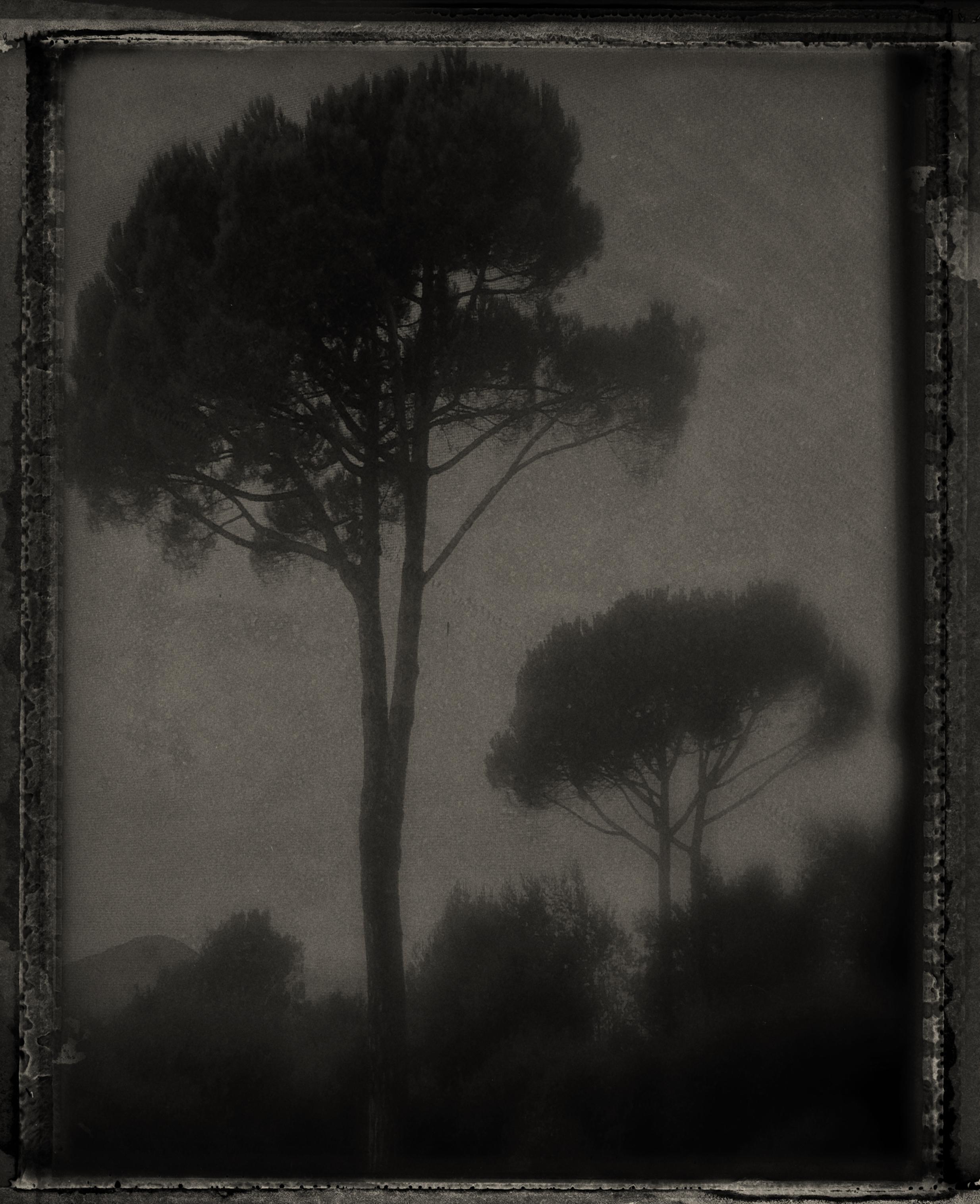 Sarah Moon, Les Pins Parasols
