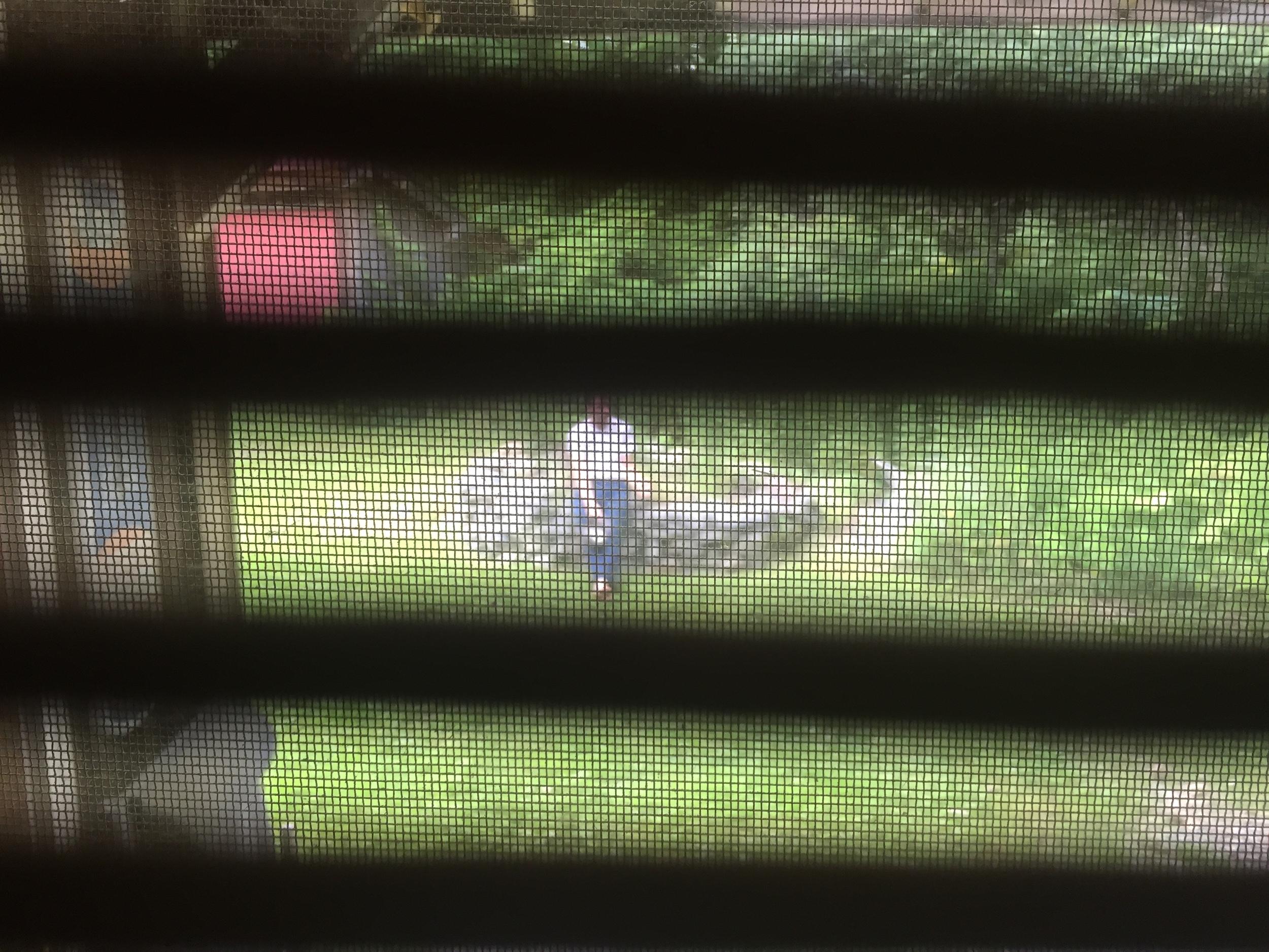 ricky thru blinds.jpg