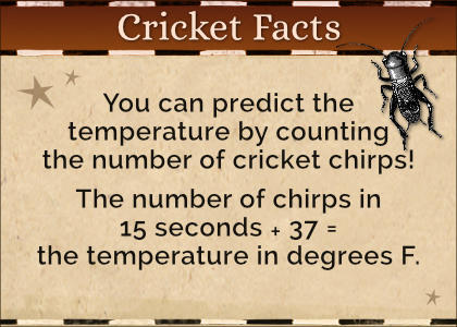 Cricket Facts