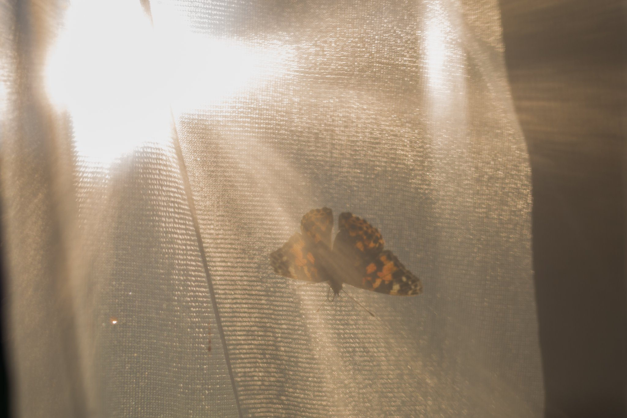We watched this butterfly spread it's wings for the first time.