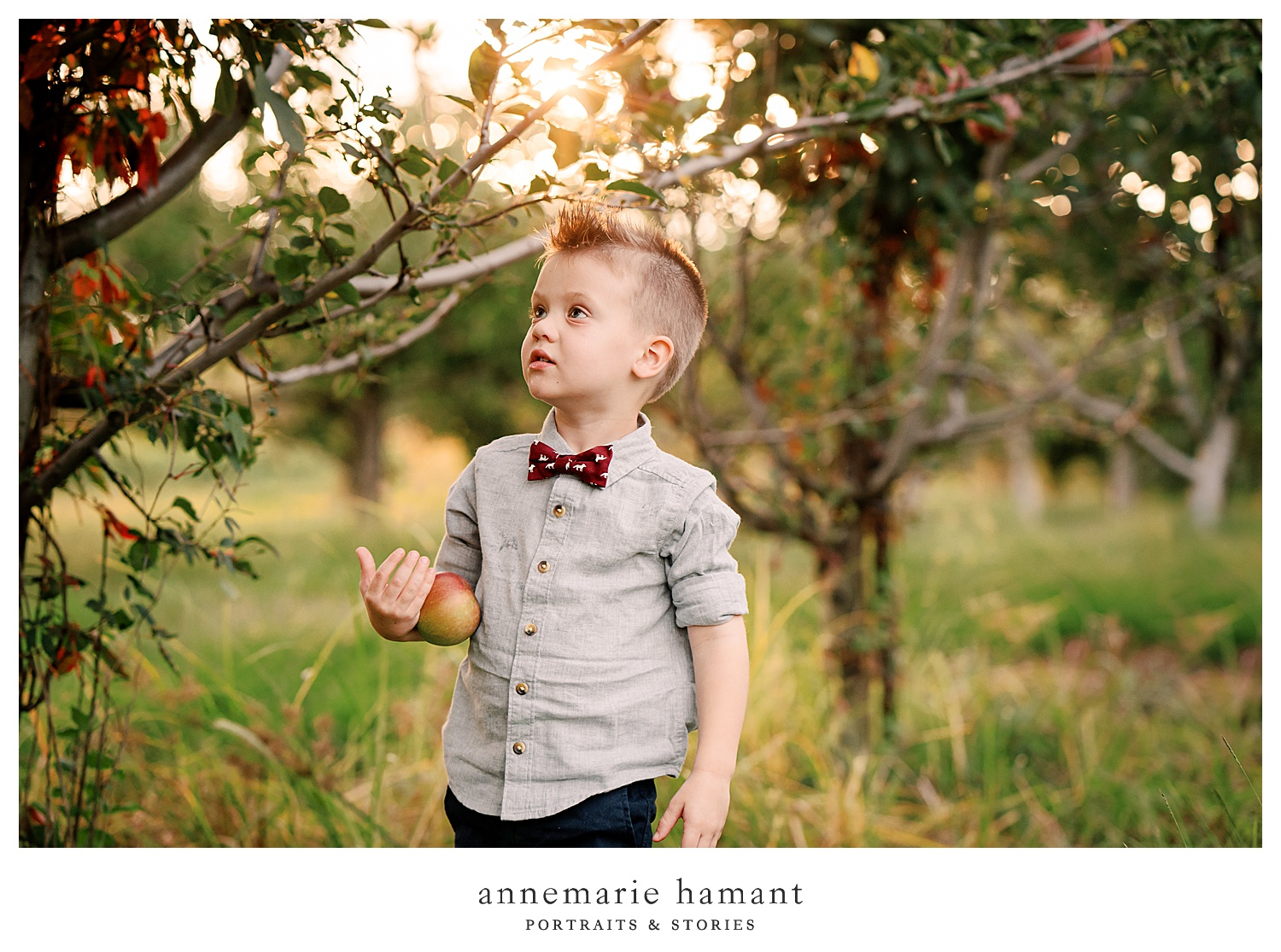 Fall family photos in an apple orchard in Lehigh Valley PA. The orchard is fun and gets gorgeous sunset light and makes for the perfect fall backdrop.