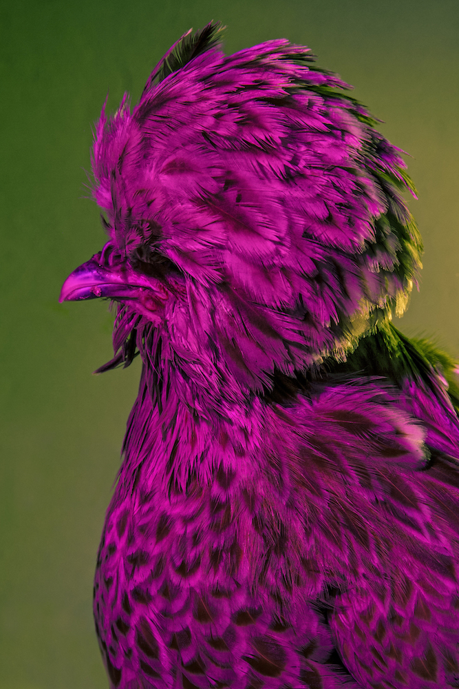 Chic Chicks ©Dan Bannino - Chanelle:Chamois laced -.jpg