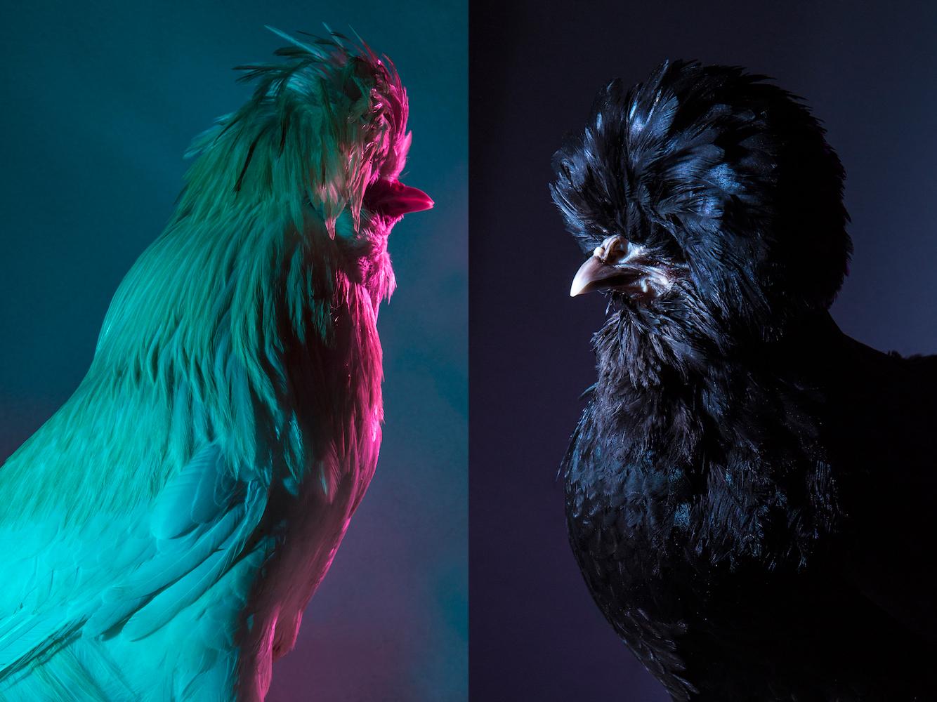 Chic Chicks ©Dan Bannino - Elvis+Maria -.jpg