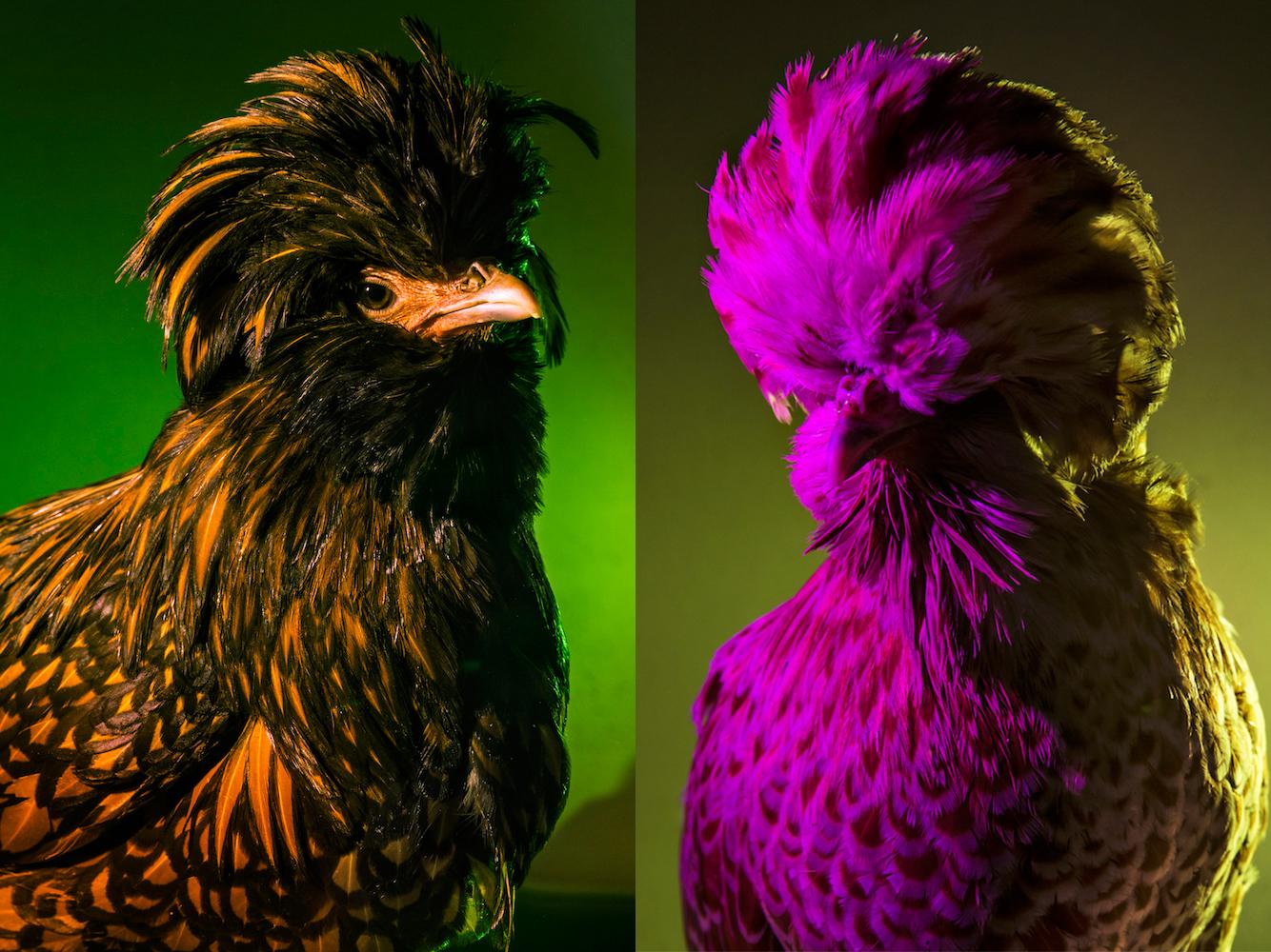 Chic Chicks ©Dan Bannino - Mandy+Chanelle.jpg