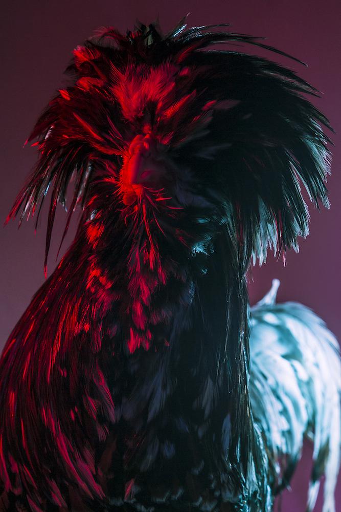 Chic Chicks ©Dan Bannino -Napoleon:Tollbunt coat-.jpg