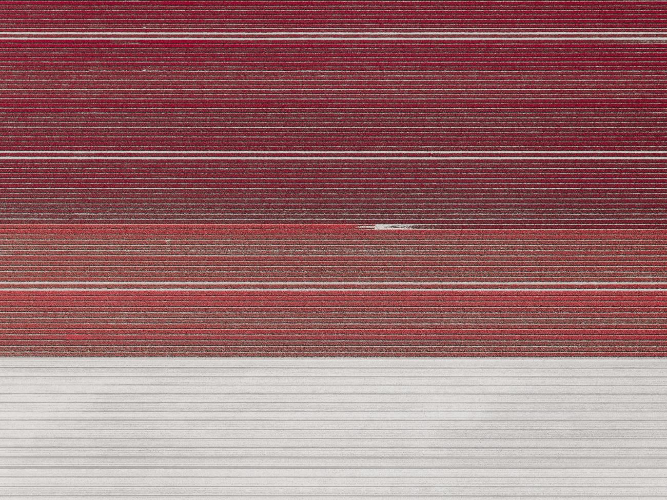 Tom_Hegen_The_Tulip-4.jpg