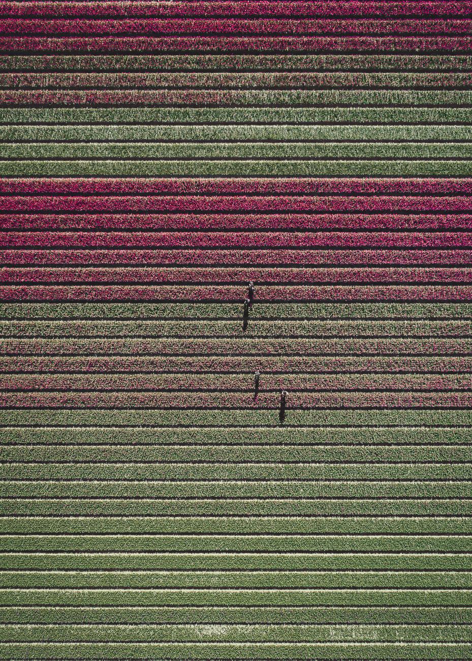 Tom_Hegen_The_Tulip-12.jpg