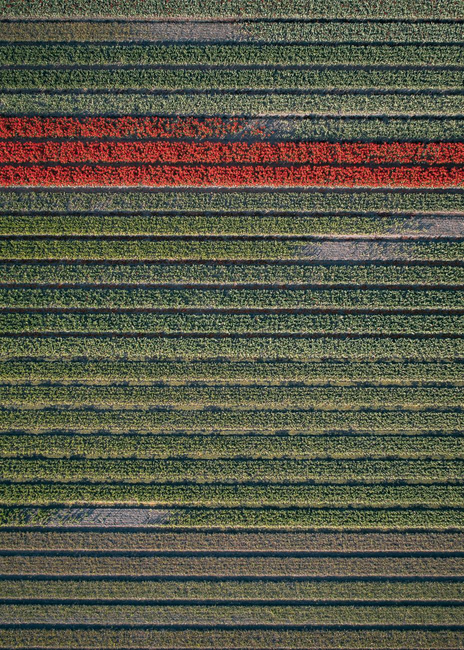 Tom_Hegen_The_Tulip-15.jpg
