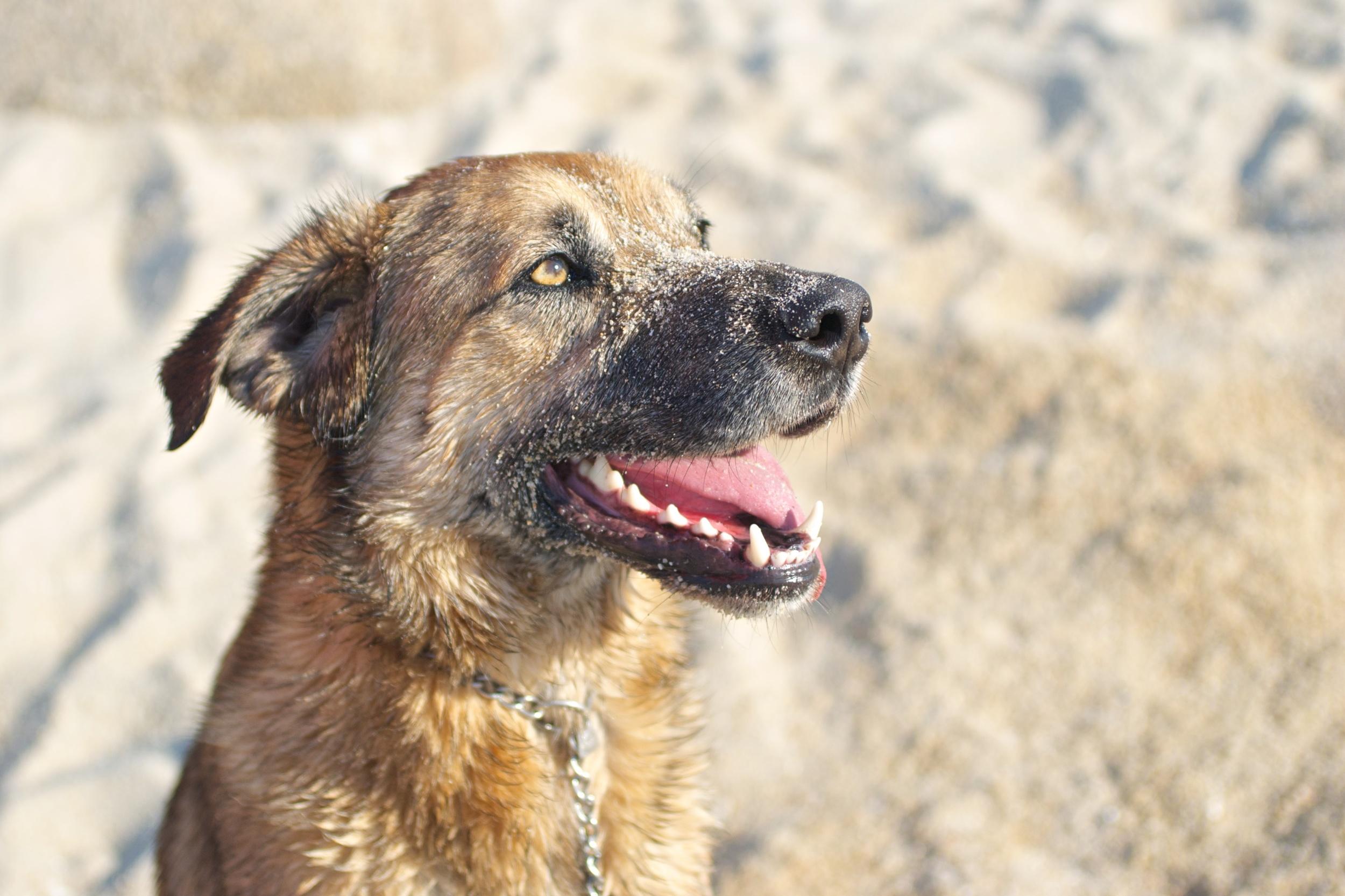 Perro. Mascota en la playa