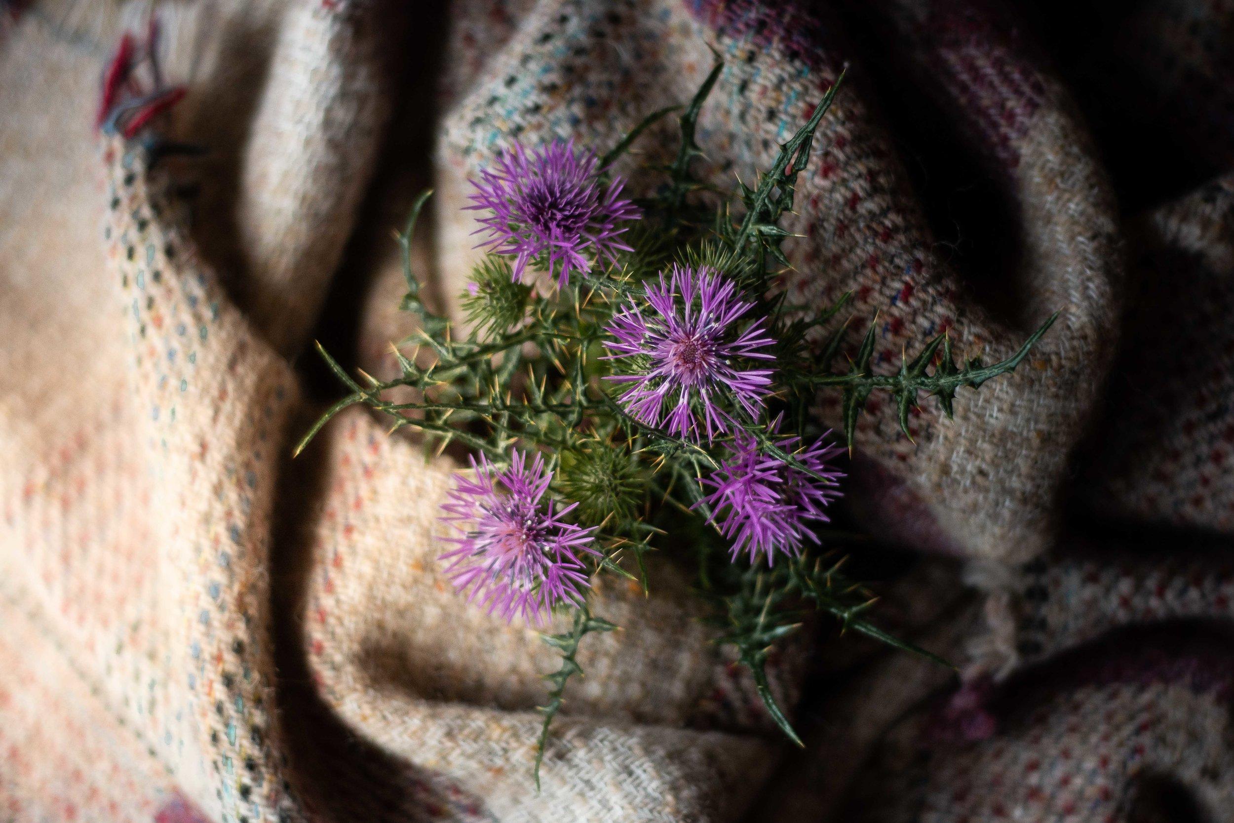 En la foto una flor de cardo, la flor nacional de Escocia y un foulard de cuadros escoceses hecho con lana reciclada que me compré en Edimburgo