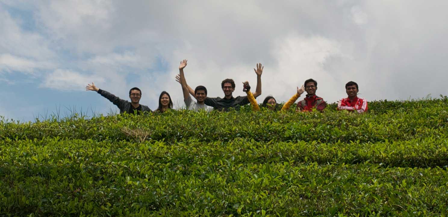 Group - Tea plantation near Bandung, Indonesia
