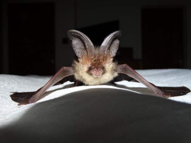 bat photo.JPG