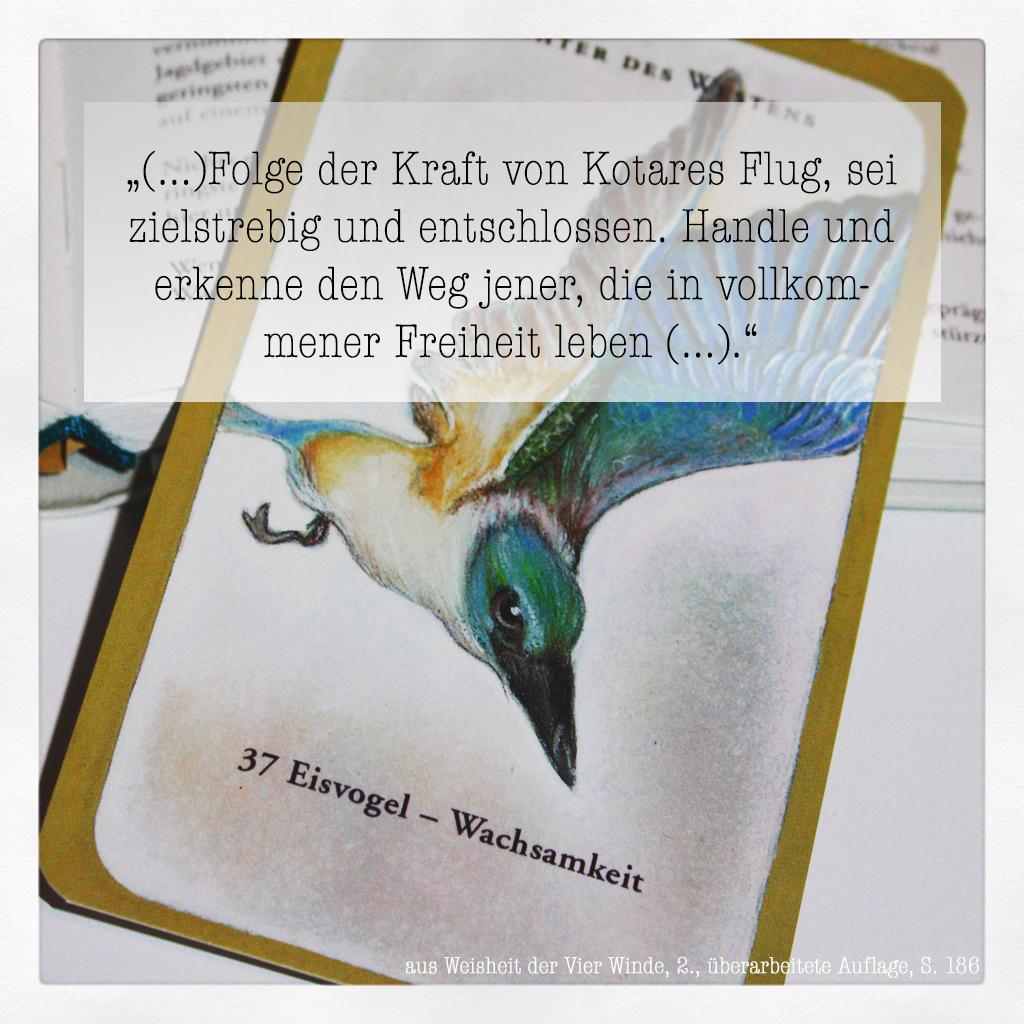 Eisvogel_Weisheit der Vier Winde_II.jpg