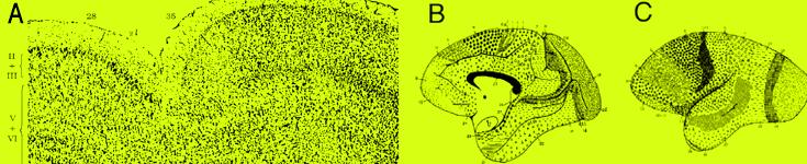 Neuro-Anatomy v2.png