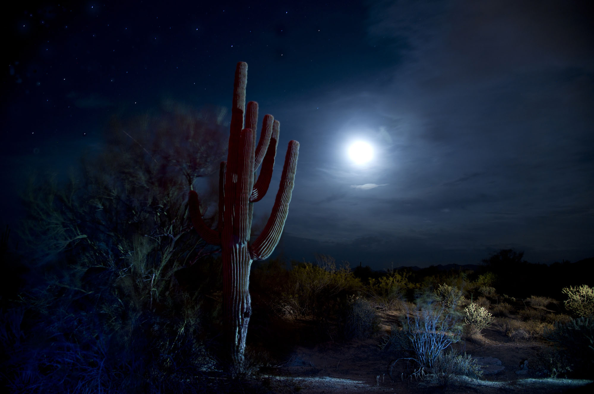 Cactus. Salt River Pima-Maricopa Indian Community, AZ.