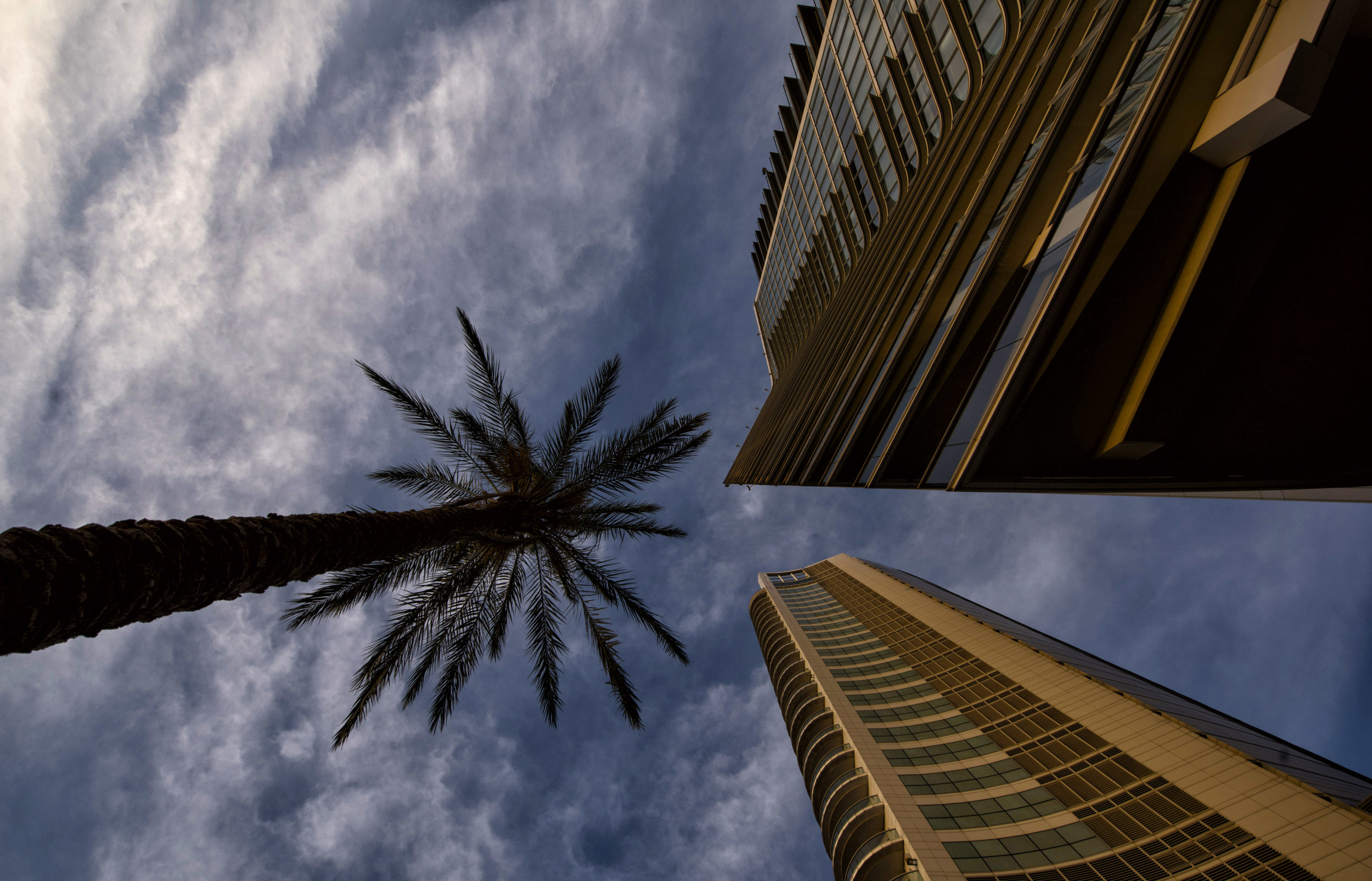 Palm Tree. Beirut, Lebanon.