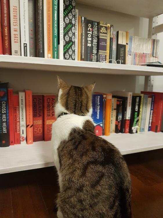 HRM Nitzan choosing her next read.